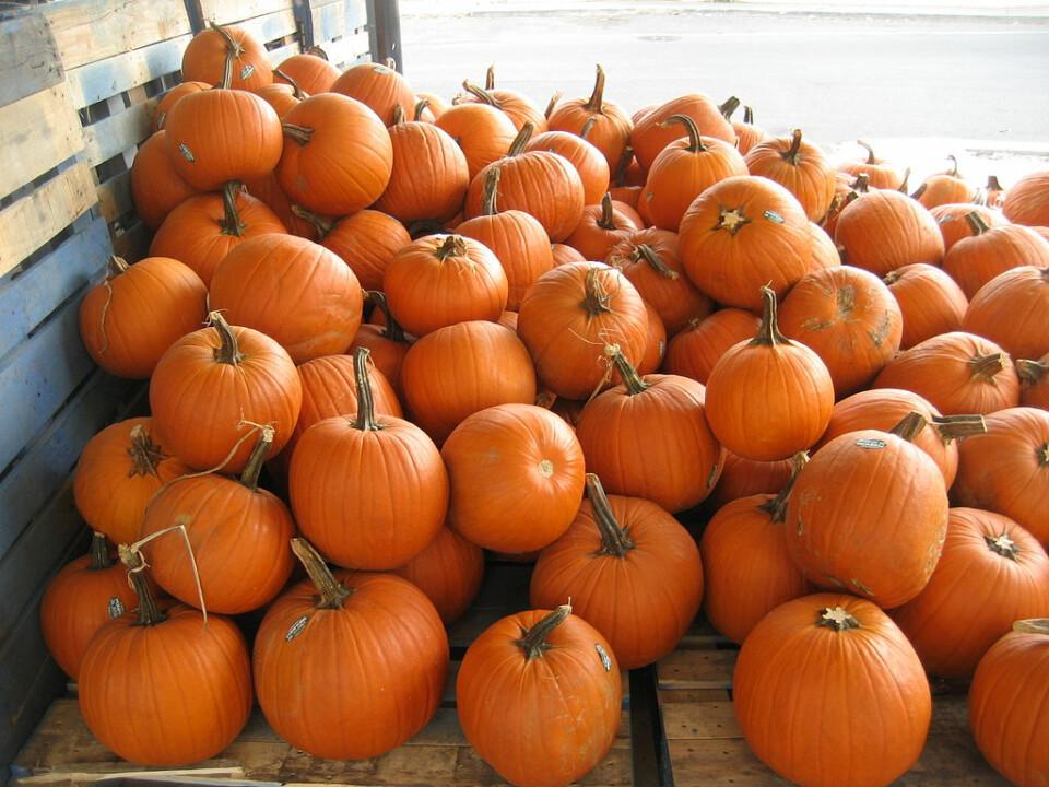 Pumpkin Patch Open!